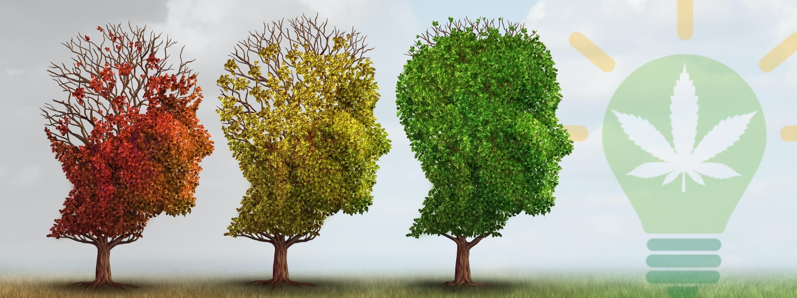 Cannabis and Conditions: Alzheimer's Disease